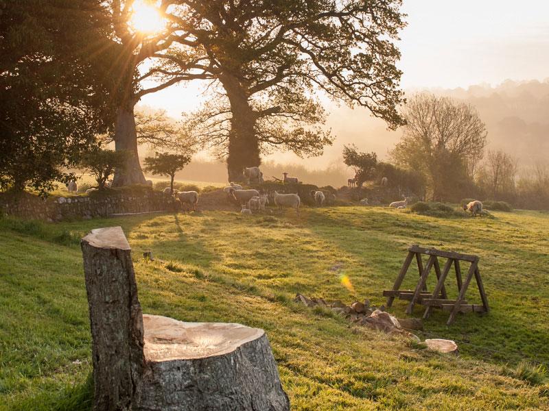 Morning Sunrise at Beear Farm