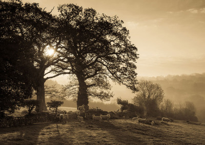 Beera Farm Morning Mist Sepia